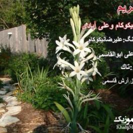 علی آبادی و علیرضا نیکوکام – گل مریم