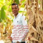 کاظم زائری آهنگ جدید اجرای زنده بصورت حفله